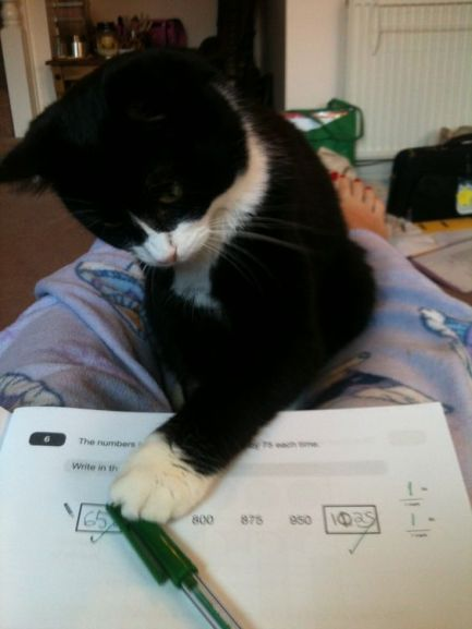 cat-marking