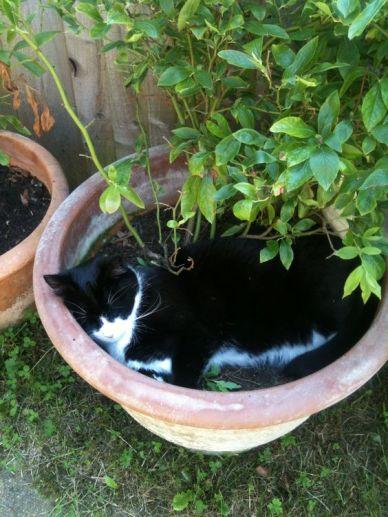 cat-plant-pot-sleep