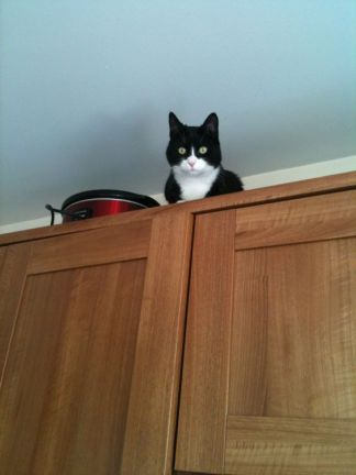 cat-up-high